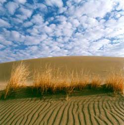 Desierto, Kerman